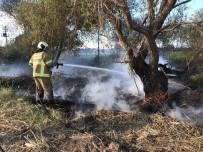 Burhaniye'de Sazlık Yangını  Korkuttu