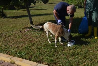 Kepez Belediyesi,  Yemek Atıklarından Organek Kedi Ve Köpek Maması Üretti