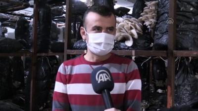 Ordu'da İki Aşçı, Piyasadaki Mantar İhtiyacını Karşılamak İçin Tesis Kurdu