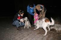 Jandarma Soğukta Aç Kalan Sokak Hayvanlarını Unutmadı