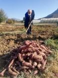 Eskişehir'de Tatlı Patatesin İlk Hasadı Başladı