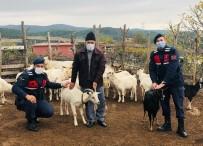 Kayıp Koyunlar Drone İle Bulundu