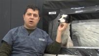 Araba Altında Ezilen Köpeğin Daha Önce De Vurulduğu Ortaya Çıktı