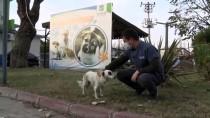 Balıkesir'de Otomobilin Çarparak Yaraladığı Köpek Yeniden Koşmaya Başladı