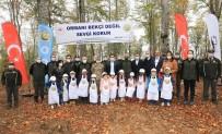 Amasya'da Orman Gençleştirme Çalışması