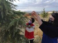 Amasyalı Gençler Ağaç Dallarına Kuş Yemi Astı
