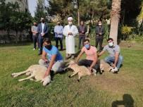 Bakan Soylu Ve Ailesi İçin Şanlıurfa'da 3 Koyun Kesildi