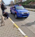 Jandarma Ekipleri 12 Sokak Köpeğini Aşıladı