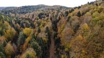 Kazdağları'nın Gizli Güzelliği Kayın Ve Göknar Ormanları