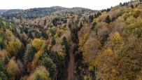 (Özel) Kazdağları'nın Gizli Güzelliği Kayın Ve Göknar Ormanları