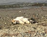 Erdek'te Kedileri Bir Köpeğin Öldürdüğü İddia Edildi