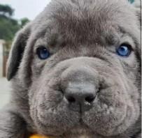 KÖPEK - İtalya'nın en ünlü köpeği