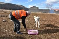 İnönü Belediyesi Sokak Hayvanlarına Sahip Çıkıyor