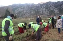 Isparta'da Bu Yıl 42 Türde 6 Milyon 500 Bin Adet Fidan Üretildi