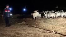 Eskişehir'de Kaybolan Küçükbaş Hayvanları Jandarma Buldu