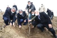 1 Milyon Ceviz Fidanı Toprakla Buluşacak