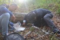 Kastamonu Ormanlarında Yetişen Aslan Yelesi Mantarıyla Alzaymır Hastalığı Tedavi Edilecek