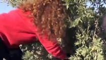 Kilisli Kadın Girişimcinin Zeytinyağında İhracat Başarısı