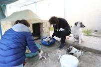 Barınakta Buluşan Hayvan Severler, Köpeklere Kulübe Yaptı