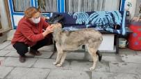 Burdur'da Vahşet, Köpeği Koyuna Saldırttı, Videoya Çekip Yayınladı