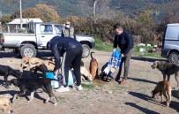 Hayvanseverler Çöplükteki Aç Hayvanlara Duyarsız Kalmadılar