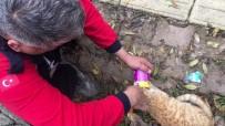 Mama Kutusuna Kafası Sıkışan Kediyi İtfaiye Kurtardı