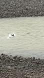Nehre Düşen Karacayı Kurtarmak İçin Gözünü Kırpmadan Çoruh Nehrine Atladı