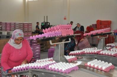 Yumurta Tavuk Fiyatlarını Geçti