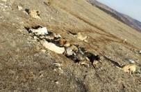 Akılalmaz Olay, 29 Köpek Uyuşturulmuş Olarak Bulundu