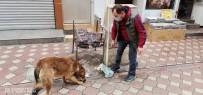 Çarşı Esnafı Sokak Hayvanlarına Sahip Çıkıyor