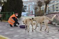 İnönü Belediyesi Sokak Hayvanlarının Yanında Olmayı Sürdürüyor