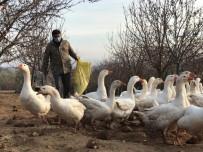 Arkadaşının Tavsiyesine Uydu Şimdi Paraya Para Demiyor Açıklaması Türkiye'nin Dört Bir Yanına Kaz Ve Yumurta Satıyor