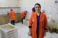Kadın Kooperatifi Kivi Ve Hurmadan Pestil Üretimine Başladı