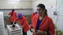 Yalova'da Kadın Girişimci Kooperatifi Kivi Ve Hurmadan Pestil Üretiyor