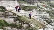 Tunceli'de Kayalıklarda Mahsur Kalan Keçiler AFAD Ekiplerince Kurtarıldı