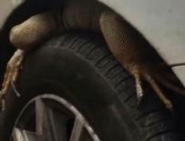 İGUANA - Arabanın ön tekerleğindeki hayvanı görenler gözlerine inanamadı!