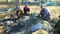 Burhaniye'de Zeytinciye Hasat İzin Belgesi