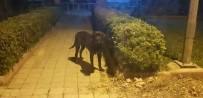 Erdek'te Kedileri Öldüren Köpek Barınakta