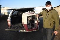 (Özel) Şanlıurfa'da Çiftliğe Sığınan Yaralı Turna Tedavi Altına Alındı