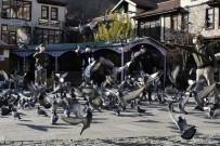 Aç Kalan Güvercinlerin İmdadına Polisler Yetişti