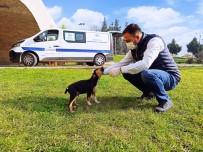 Biga Belediyesi Sokak Hayvanlarını Kısıtlamalarda Unutmadı