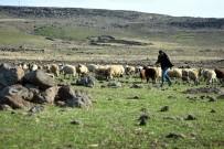 (Özel) Sokağa Çıkma Kısıtlamasında Çobanlar İşlerinin Başında