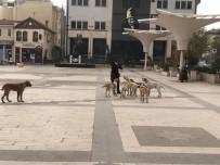 Sındırgı Sokakları Sokak Hayvanlarına Kaldı