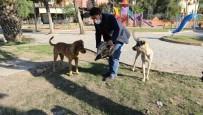Yüreğir'de Sokak Hayvanları Unutulmadı