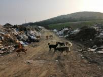 Çöplük Taşındı, Köpekler Aç Kaldı