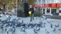 Burhaniye'de Güvercinleri İmece İle Besliyorlar