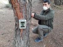Ormanlara Fotokapanlar Yerleştiriliyor