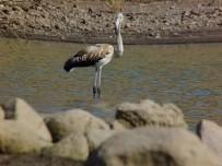 Tunceli'de Flamingo Görüntülendi