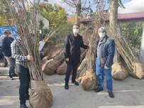 Tunceli'de  Köylere Ceviz Ve Badem Fidanı Dağıtımı