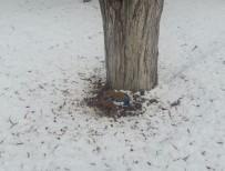 SIBIRYA - Aşırı Soğuklarının Yaşandığı Bayburt'ta Belediye Ekipleri Hayvanların Yaşam Umudu Oldu